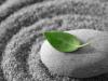 Leaf resting on stone